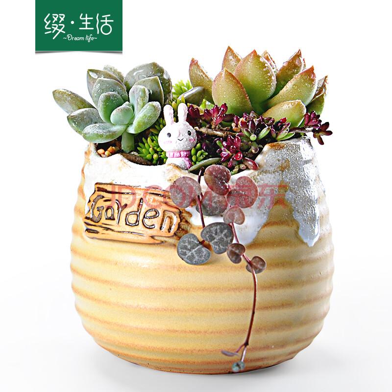 缀生活 彩色陶瓷多肉植物花卉盆栽 手工制作创意礼品