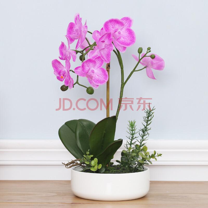 如果(roogo)仿真花蝴蝶兰套装兰花假花装饰花客厅餐桌图片