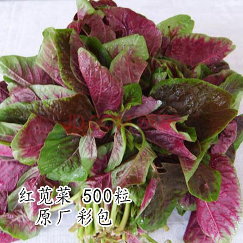满聚 四季蔬菜种子 阳台种菜盆栽 辣椒种子 西红柿种子 生菜种子 香葱