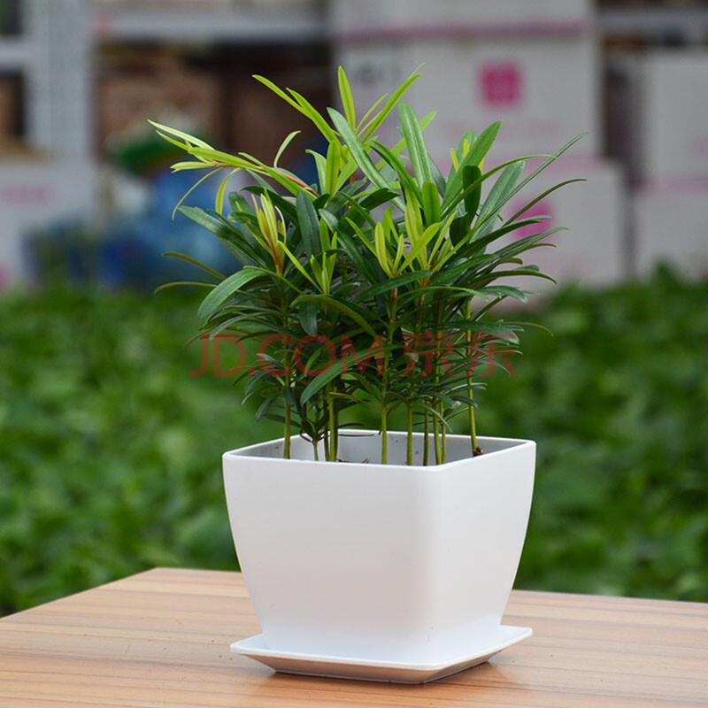 办公室绿色盆栽植物