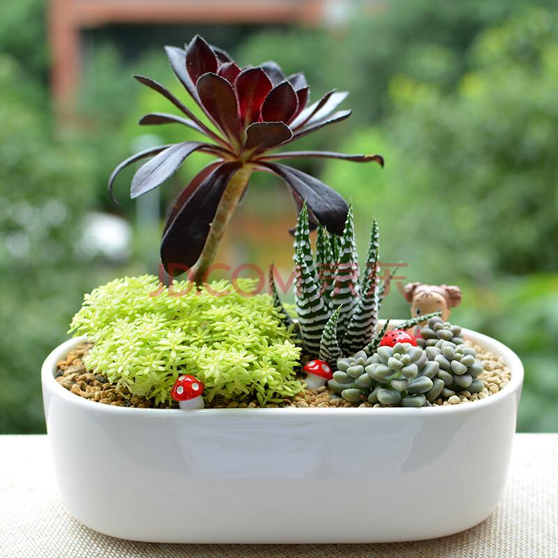 多肉植物组合盆栽