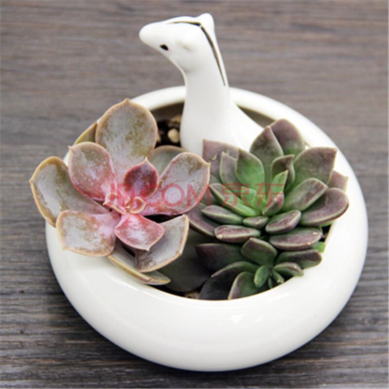 多肉植物花盆创意肉肉花盆白瓷花盆动物陶瓷 白瓷小马