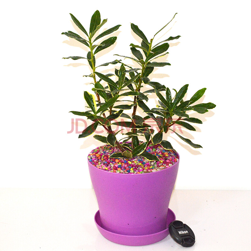 什么盆栽好养又好看图片_