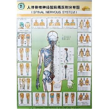 人体脊椎神经酸麻痛反射分布图 PDF电子版