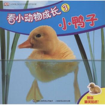看小动物成长:小鸭子