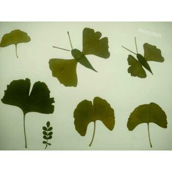 真树叶标本粘帖画 幼儿园儿童diy手工制作粘贴画材料包r 黄色 蝴蝶图