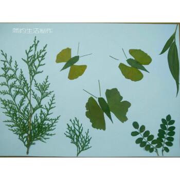 真树叶标本粘帖画 幼儿园儿童diy手工制作粘贴画材料包r 浅黄色 蝴蝶