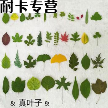 手工书签幼儿园小学生小草叶子粘贴画植物标本过塑膜diy塑封树叶 32种