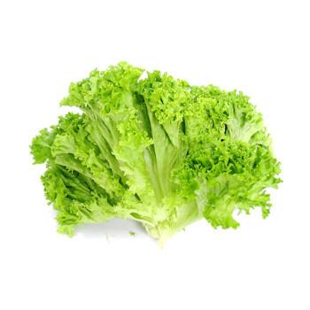 花叶生菜1kg 绿萝莎 沙拉菜 新鲜蔬菜图片