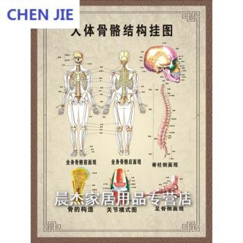 人体骨骼结构图全身经络穴位图挂图肌肉足部中医养生保健按摩海报dsn