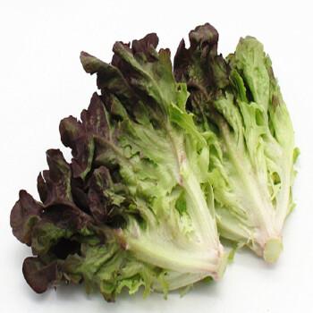红橡叶 橡叶生菜 红叶生菜 生菜 蔬菜 新鲜 500克 500g图片