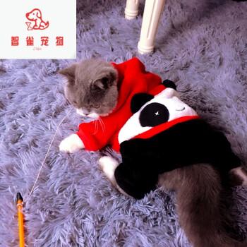 可爱猫咪四脚衣小猫幼猫成猫衣服英短折耳加菲宠物春夏 一经出售 s