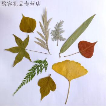 天然真树叶标本 幼儿园手工制作树叶贴画 儿童diy干树叶手工材料 叶子