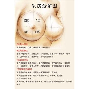 女性乳房结构图矢状解剖图胸部健康疾病艾灸全身经络穴位海报 30寸