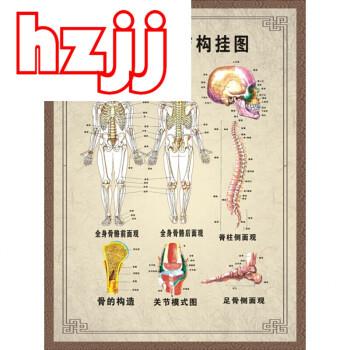 人体骨骼结构图身经络穴位图挂图肌肉足部中医养生按摩海报d 90寸