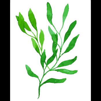 树 树叶 的结构图介绍