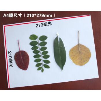 树叶塑封膜 5寸冷裱膜手工制作照片植物标本书签防水护卡 50张/a4光膜