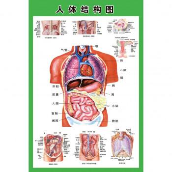 人体内脏解剖示意图医学宣传挂图人体器官心脏结构图医院海报 24寸