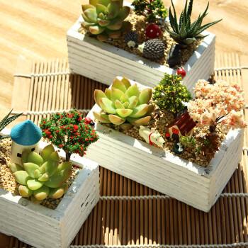 子乐湾多肉植物组合盆栽办公室花盆绿植微景观情人节送女朋友生日礼物