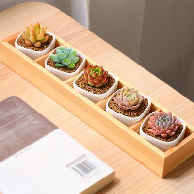MuMuHome MMH多肉植物组合盆栽新手套餐肉肉植物含白瓷花盆含土送木托包邮 五格木盒组合