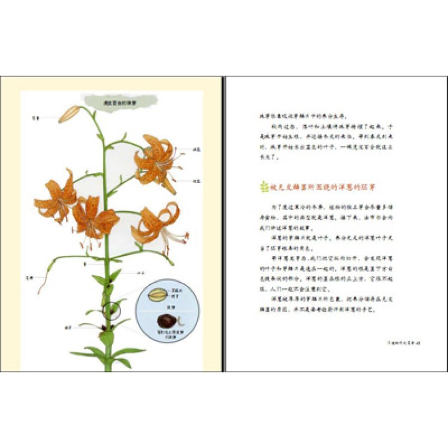 他曾经出版过《树木图鉴》《植物图鉴》《动物图鉴》《奶奶的农事日记