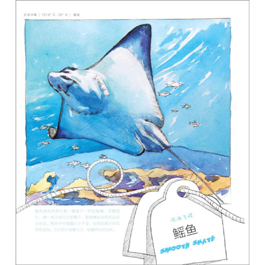 绘画 彩铅/铅笔画 海洋绘:38种海洋生物的绘物语