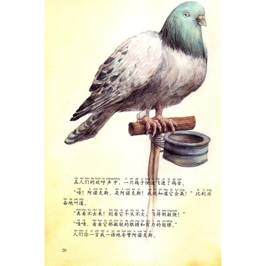 西顿动物记8:令人敬佩的飞行勇士(注音版)