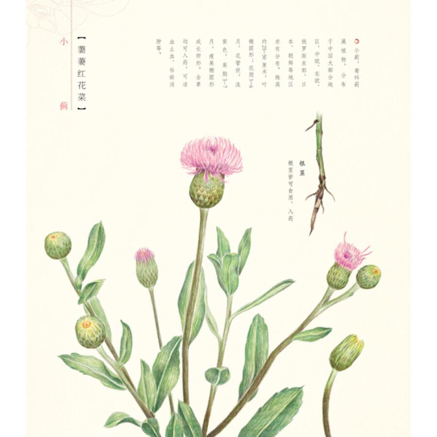 绘画 彩铅/铅笔画 花之绘2:二十四节气花卉的色铅笔图绘