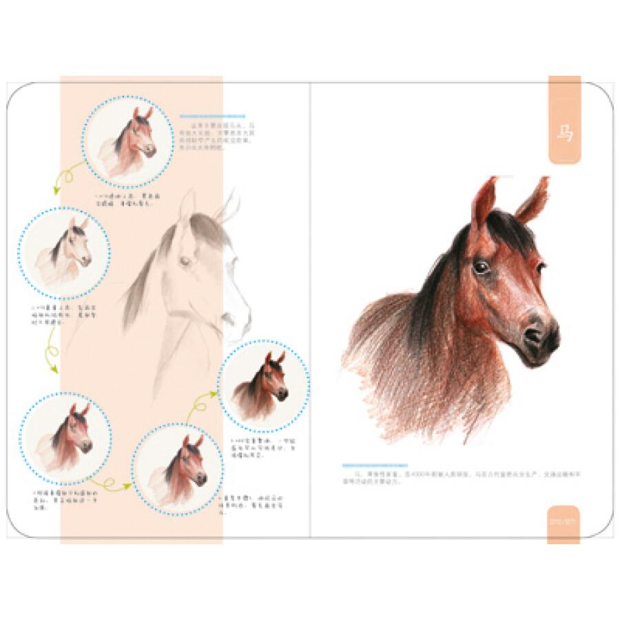清新彩铅微笔记:动物集