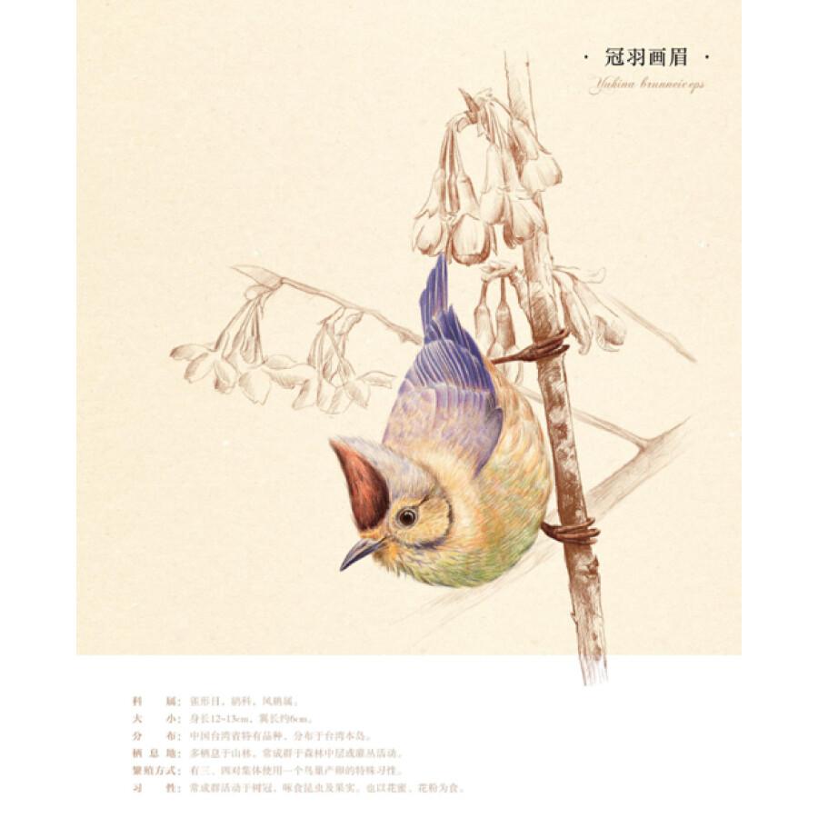 《鸟之绘:38种鸟的色铅笔图绘》(飞乐鸟)【摘要