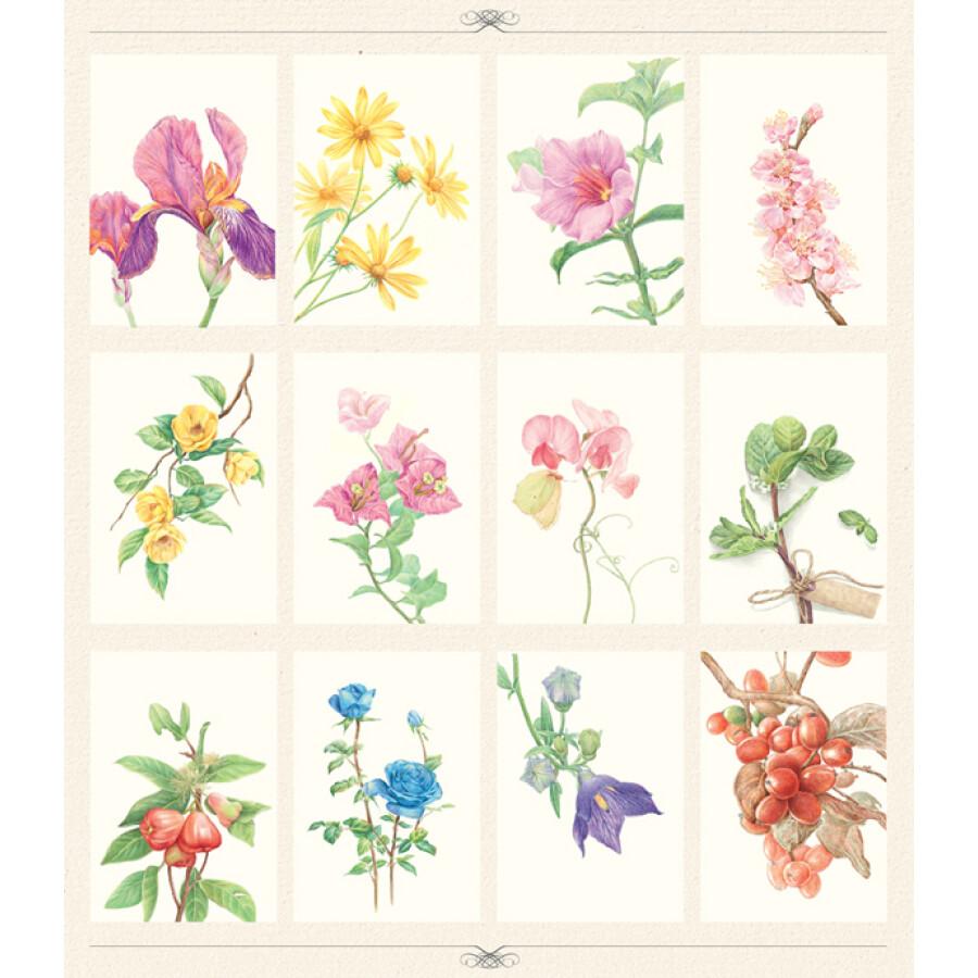《色铅笔的手绘时光:植物绘明信片组》