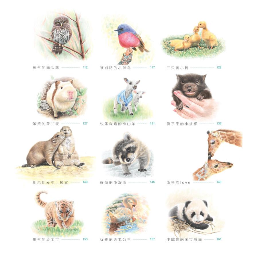 动物绘2:33种最萌动物的色铅笔图绘