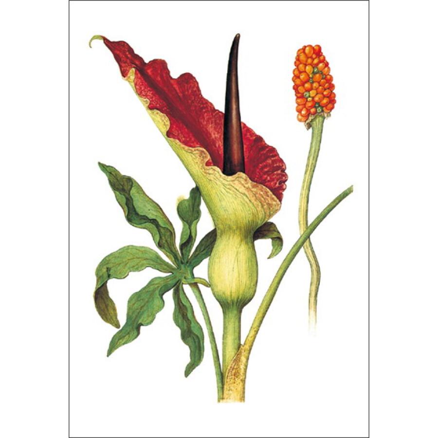 《花卉之书:世界大师手绘经典》【摘要