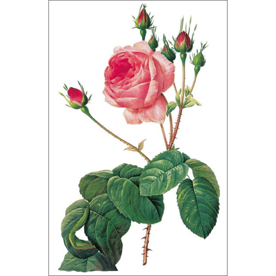 《玫瑰之书:世界大师手绘经典》【摘要
