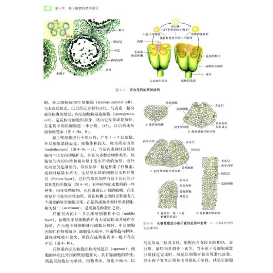 针对学生鉴别植物的能力薄弱,本书 加强了种子植物形态术语的配图和65