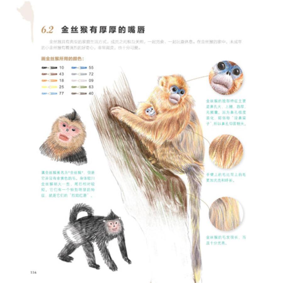 《动物绘:38种可爱动物的色铅笔图绘》(飞乐鸟)