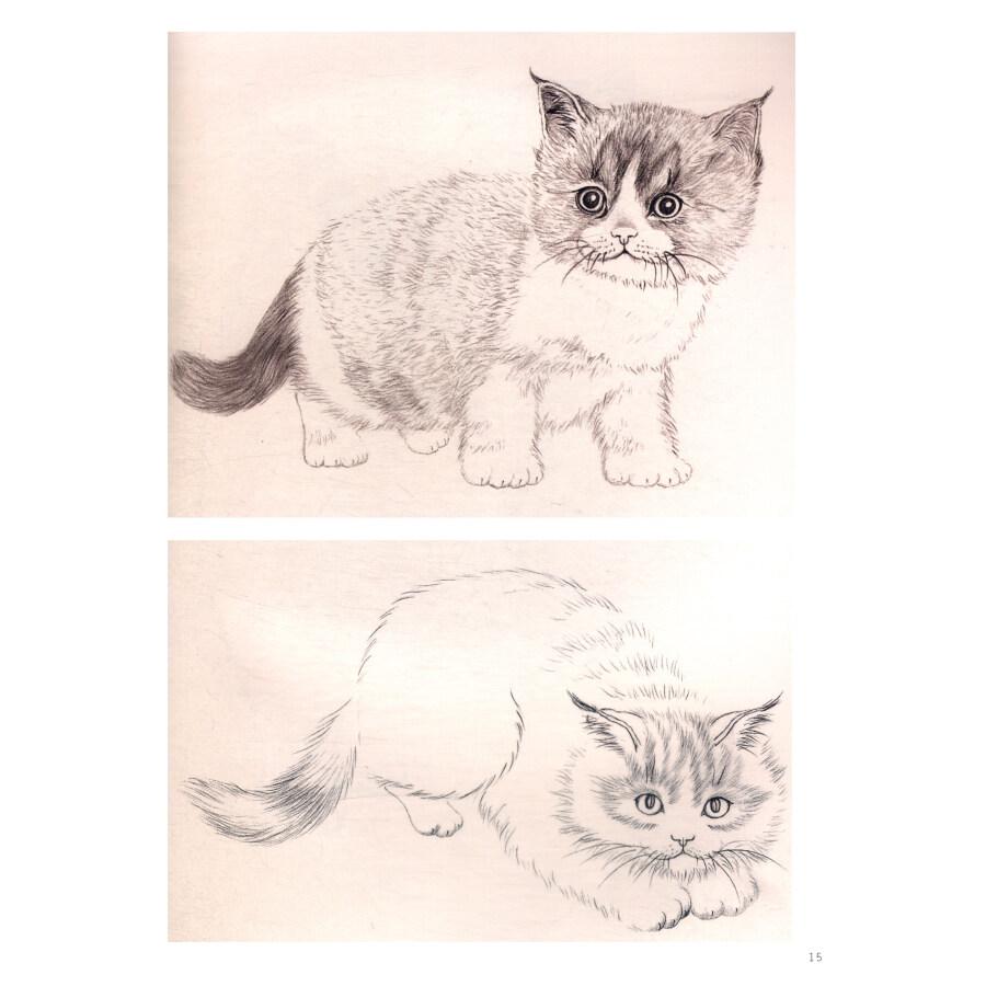 工笔猫画法图片