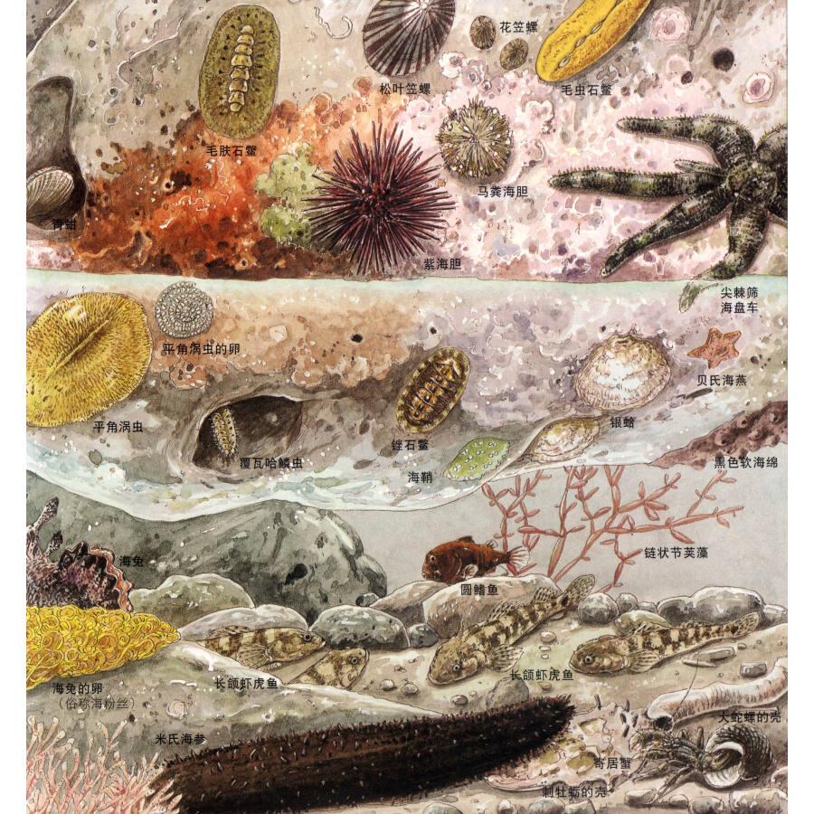 启发精选世界优秀畅销绘本:海边的动物 地底下的动物(套装全2册)