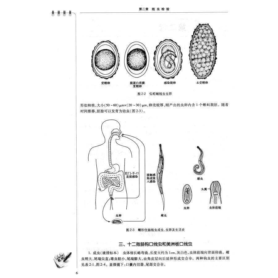 三,细粒棘球绦虫 第二节 绦虫的检验技术 一,粪便检查虫卵 二,粪便淘