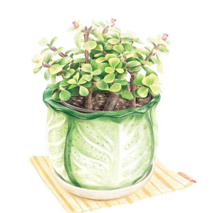 绘画 彩铅/铅笔画 植物绘2:38种可爱盆栽的色铅笔图绘