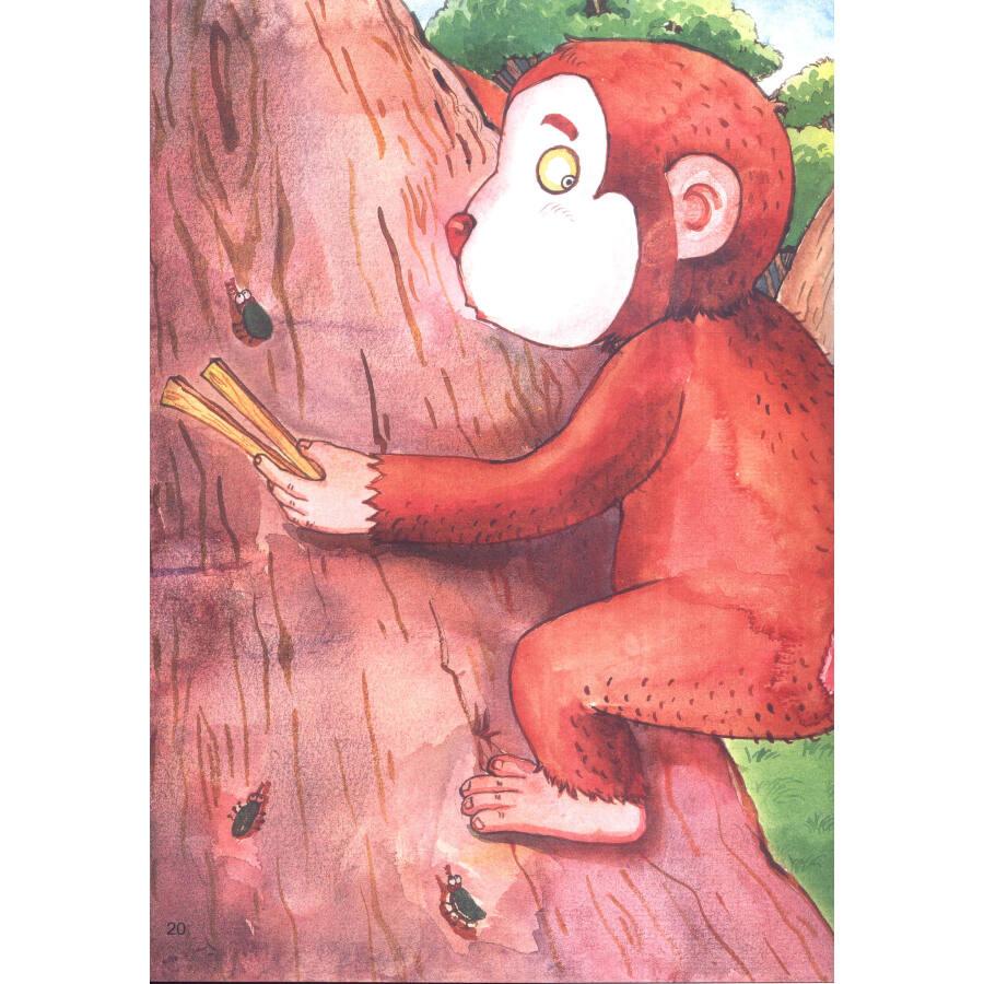 暖暖森林绘本:树上和树下图片