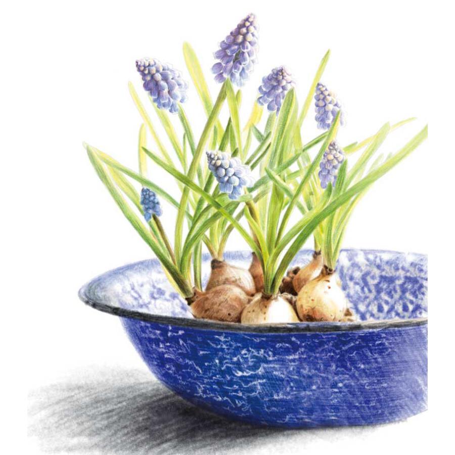 绘画 彩铅/铅笔画 植物绘2:38种可爱盆栽的色铅笔图绘    飞乐鸟,国内