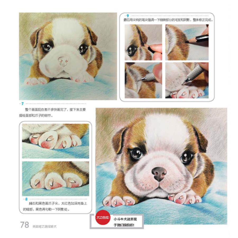 我的手绘生活:色铅笔之萌宠爱犬