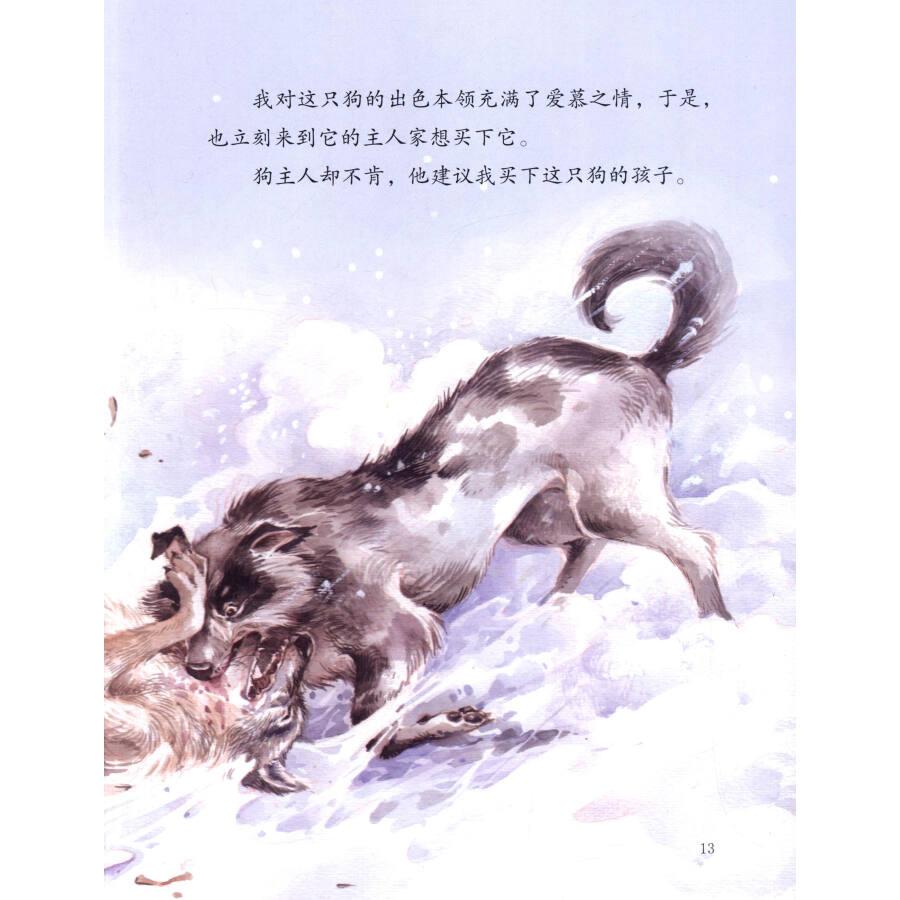 绘本西顿动物故事8:小矬子宾果