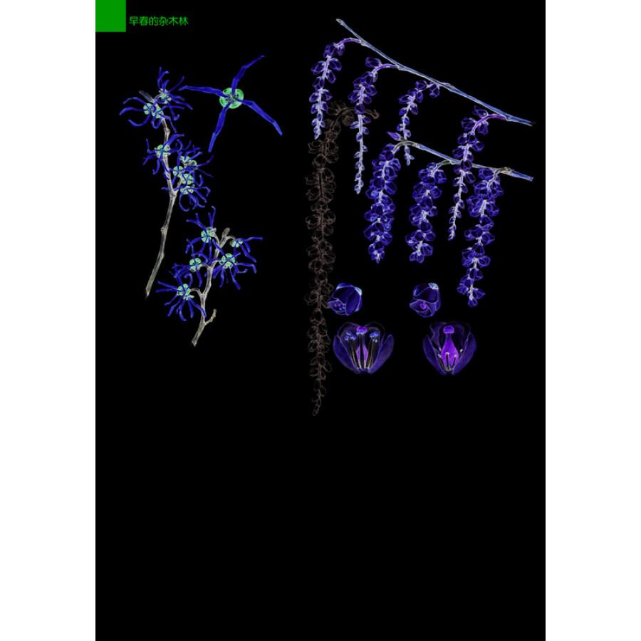 林中漫步 231种植物的手绘自然笔记