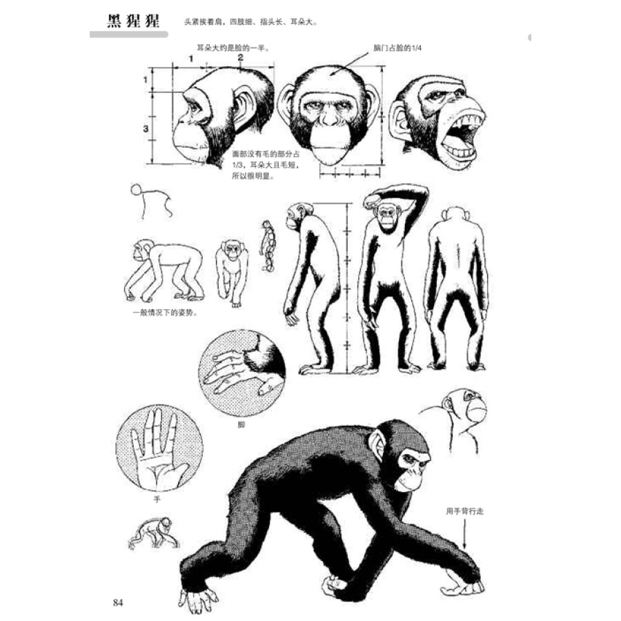 《日本漫画手绘技法经典教程(11):动物的画法》