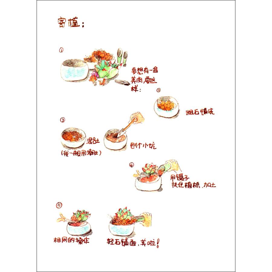 绘画 素描/速写 多肉植物手绘日记