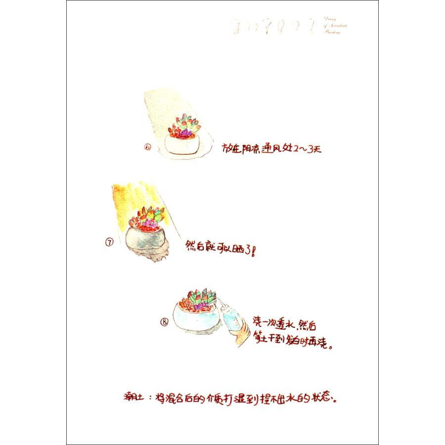 多肉植物手绘日记