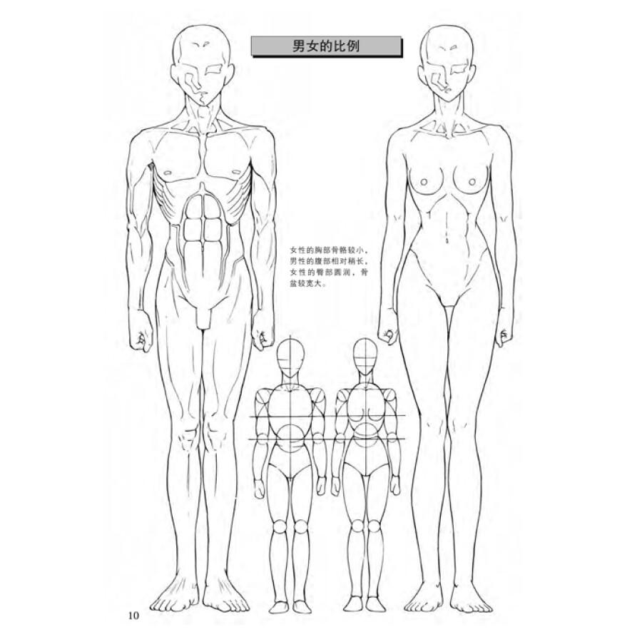 日本漫画手绘技法经典教程(2):人物身体的画法