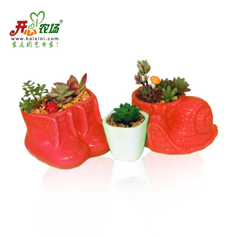 diy三盆多肉植物组合盆栽套餐
